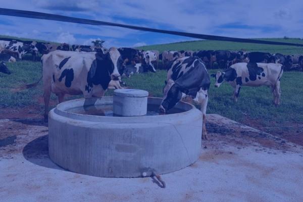 Bebedouro ANELFÁCIL® Torri para animais